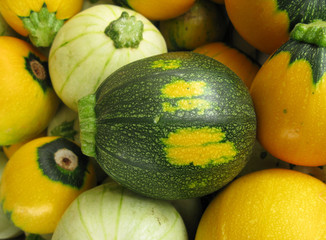 Pumpkins marrow vegetable Squash