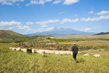 shepherd and herd on background volcano Etna poster