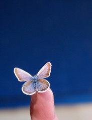 Butterfly on fingertip