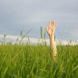 The hand stretched from a grass upwards