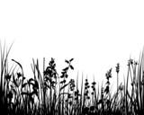 Fototapety meadow grass