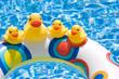 Ducks in Summer