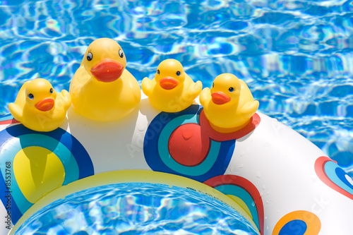 Ducks in Summer
