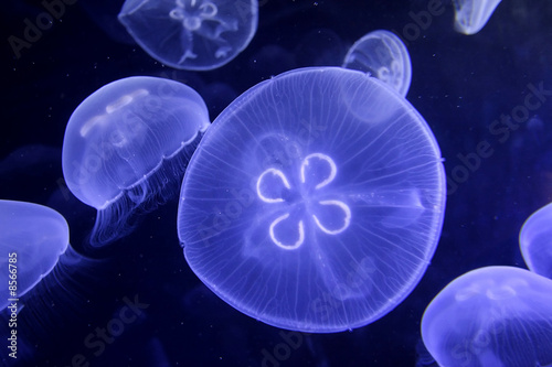 underwater image of jellyfishes
