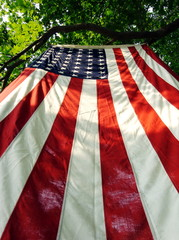 american flag hanging from tree