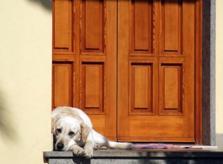 Cane sulla porta