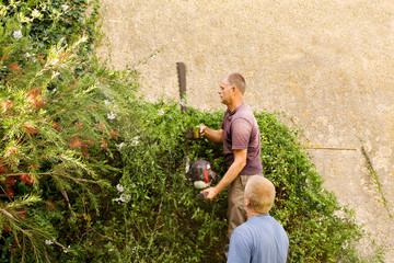 Trimming climbing plant
