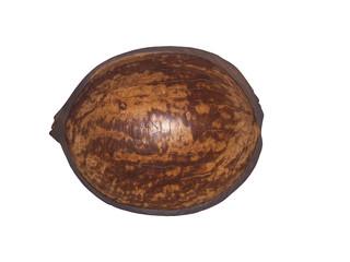Guscio noce di cocco_interno