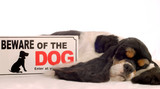 american cocker spaniel sleeping with beware of dog sign poster