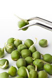 pea on tweezers poster