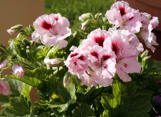 A plant with pink flowers