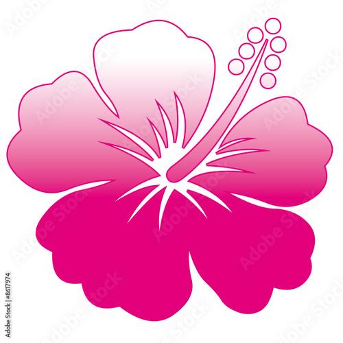 comment dessiner une fleur d hibiscus