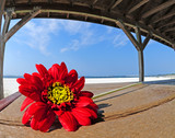 Pretty flower in beach shelter poster