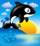 Killer whale with sunset poster