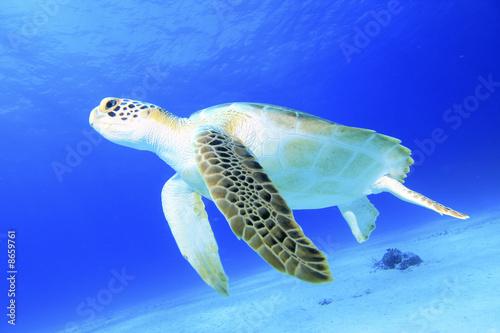 Fototapete Bahamas - Caribbean - Reptilien / Amphibien