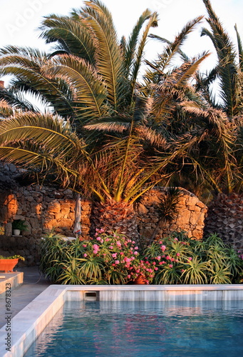 Swimming pool with palm trees