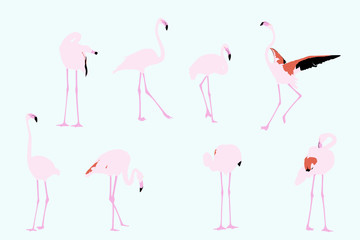 flamingos, vector collection for designers