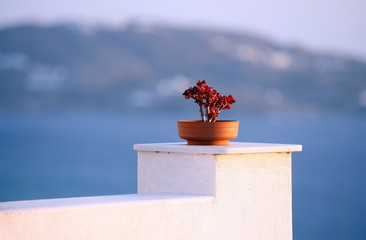 Flower pot on wall