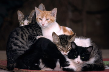 A family of cats
