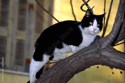 Cat walking on tree branch