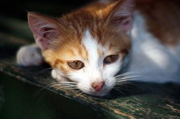 Closeup of cat lying down