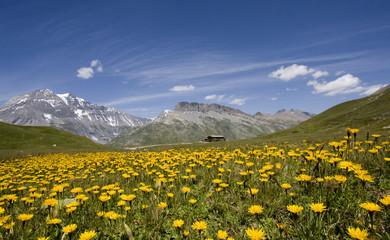 Franch alps in summer