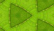 Underside Of Green Leaf Seamless Tile Background 9
