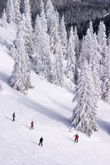 People skiing on Jahorina, Republika Srpska, Bosnia and Herzegov