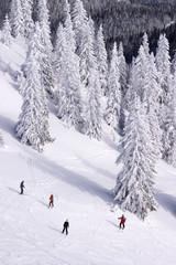 People skiing on Jahorina, Republika Srpska, Bosnia and Herzegov