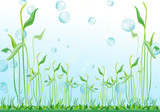 Fototapety Plante aquatique