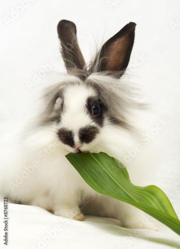 Leinwanddruck Bild Beautiful dwarfish rabbit