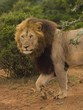 The African Bush reveals one of its many surprises