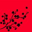 ombre de fleurs sur branche