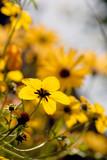 Backlit yellow flower Intimate garden poster