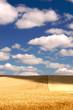 Leinwandbild Motiv Gloden sheat field in the Palouse Region, Washington, USA