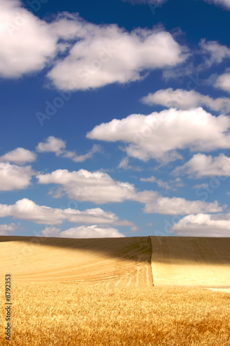 Leinwanddruck Bild Gloden sheat field in the Palouse Region, Washington, USA