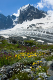 Flowers and high mountains peak with glacier poster