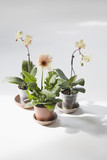 Three potted flowers on floor