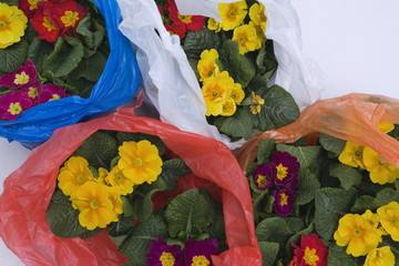 Flowers in plastic bags
