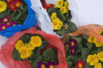 Flowers in plastic bags