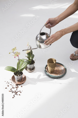Woman watering potted flower, low section