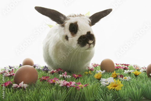 Rabbit with bows on Easter meadow