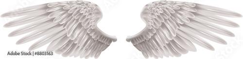 White Wings - 8803163