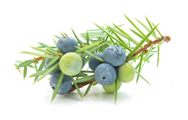 Juniperus berries
