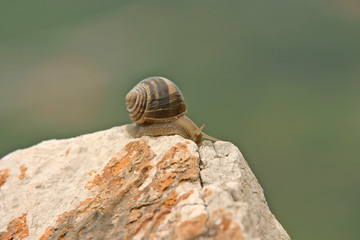 Snail on a top of the rock