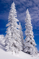 Snowy landscape on Jahorina mountain near Sarajevo