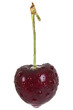 Fresh black cherry macro isolated on a white background