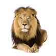 Leinwanddruck Bild - Lion (4 and a half years)