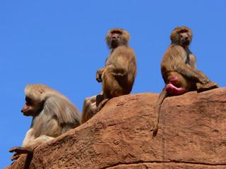 Affenfelsen