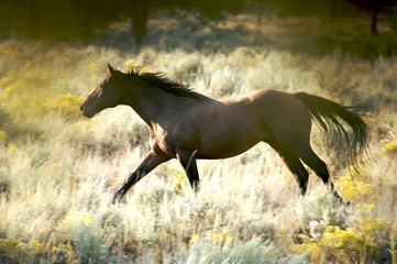 Beautiful Brown Horse Running in the Wild